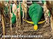 約翰迪爾觸碰式玉米對行自動駕駛系統.jpg
