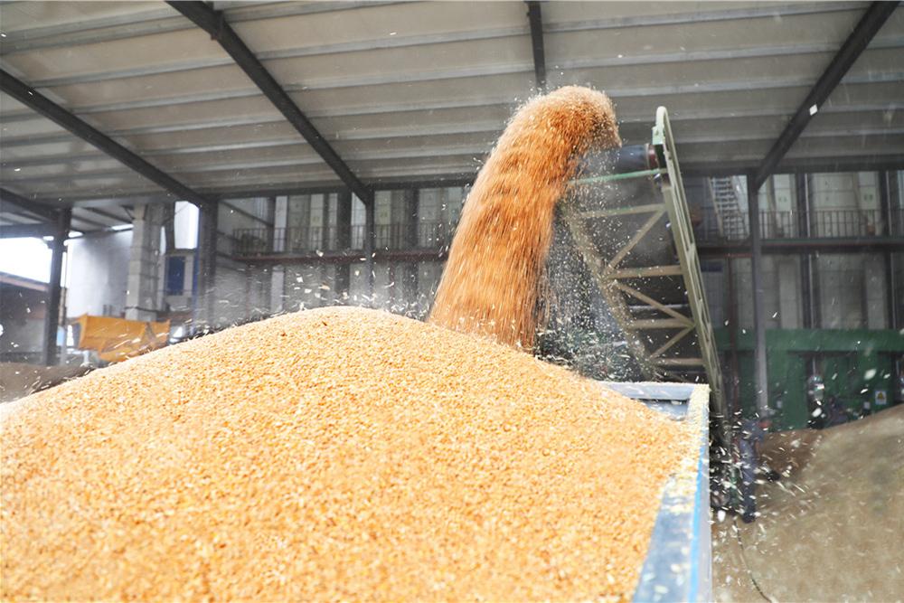 金灿灿的麦子