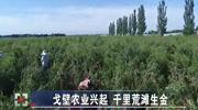 甘肃:戈壁农业兴起 千里荒滩生金