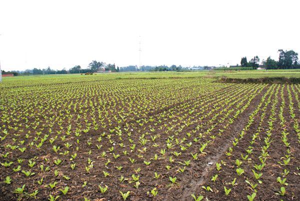 专家详解如何做到标准化种植
