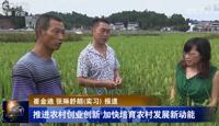 加快培育农村发展新动能