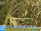 水稻亩产创纪录