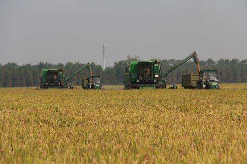 农业农村部:深入推进四大作物和特色作物良种联合攻关