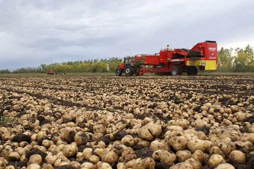 马铃薯主食化进程加快