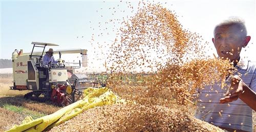 全国收获冬小麦过半面积近2亿亩