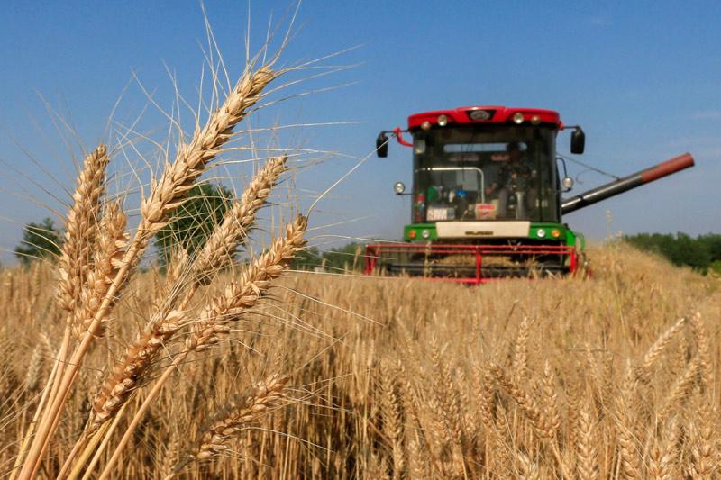 托市价变托底价 小麦市场化脚步还有多远?