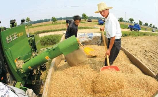 农机代劳 20多万亩粮田收割省心省力
