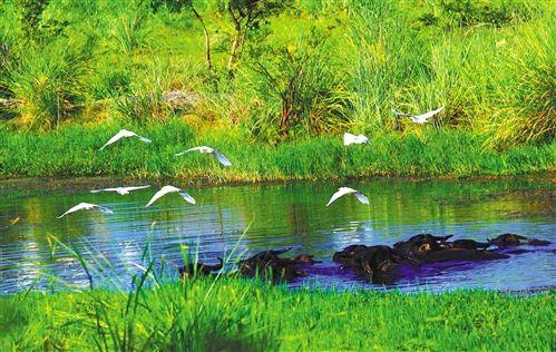 河北省下达农业资源及生态保护补助资金34186万