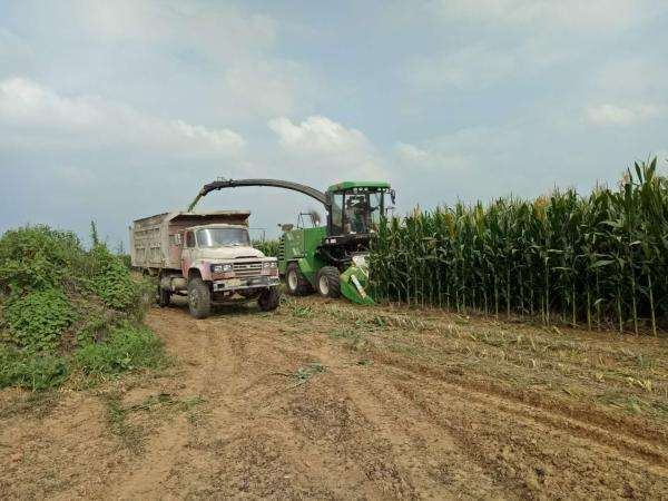 乡村振兴中畜牧业发展前景如何?