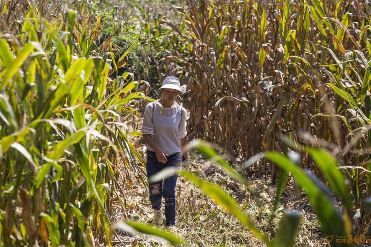 农妇拥5台机械月入6万 对讲机指挥