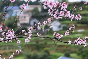 这是3月18日在吉首市枫香村拍摄的初春美景。早春时节,湖南省吉首市各处春暖花开,一派春意盎然的景象。