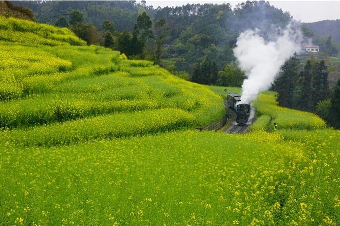 3月19日,一辆小火车从乐山市嘉阳镇的油菜花田中驶过。早春时节,四川省乐山市嘉阳镇的油菜花竞相绽放,一派春意盎然的景象。