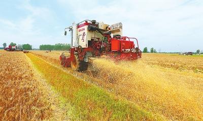 今年麦收开始啦!河南省已收获188万亩