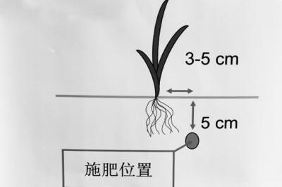 水稻侧深施肥技术减肥增效明显