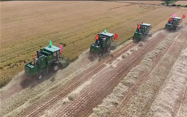 """鲁西万亩""""托管小麦""""收割季 粮满仓金满地"""