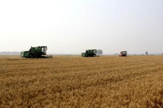 从夏收看一个种粮合作社的农业供给侧结构性改革.jpg