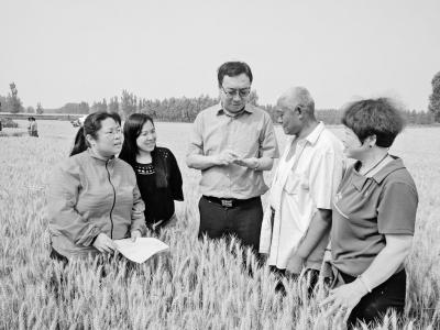 这里的小麦为啥种得好,又卖得好?