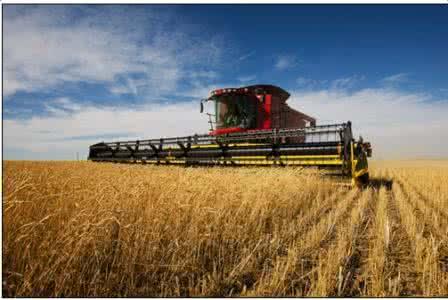 上半年农业农村经济运行 稳中向优 稳中向新 稳中向绿
