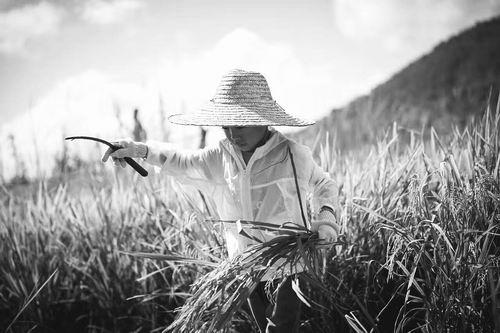共享农业,下一个风口?