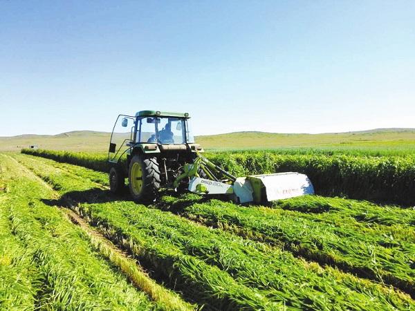 种养结合 实现农牧双赢