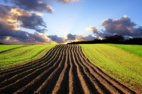 耕地面积略减 质量有所提升