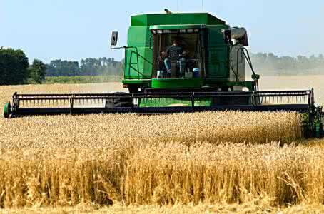 新小麦价格小幅上涨 分析师:趋势将延续至9月底