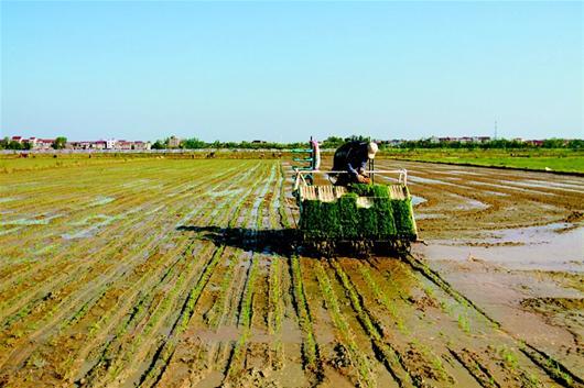 双季晚稻生产全程机械化技术指导意见(试行)