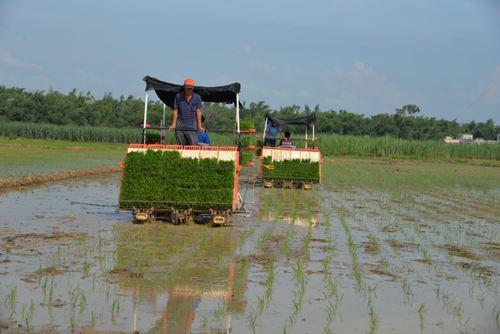 广西晚稻生产全程机械化技术指导意见(试行)