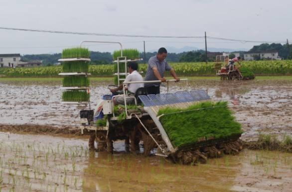 广西水稻生产全程机械化解决方案(试行)