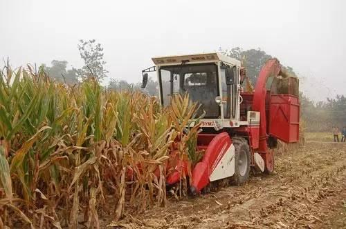 新玉米价格今年比去年高吗 这些信息对农民重要