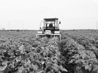 华北棉区棉花生产全程机械化实现突破