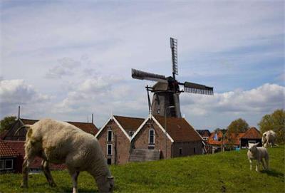 荷兰农场后继无人 网络平台让城市青年经营农场