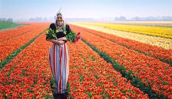 荷兰农业领先世界的秘密