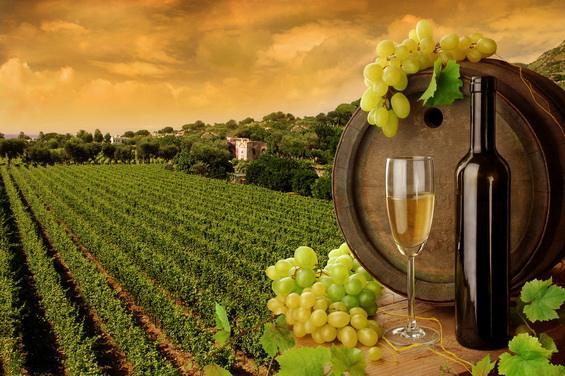 法国农业合作社: 破解小农生产与大市场矛盾