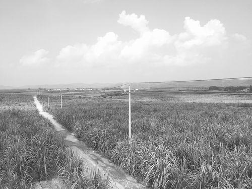 整治土地,为现代农业铺路