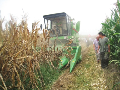 莱州:玉米生产真正迈向全程机械化
