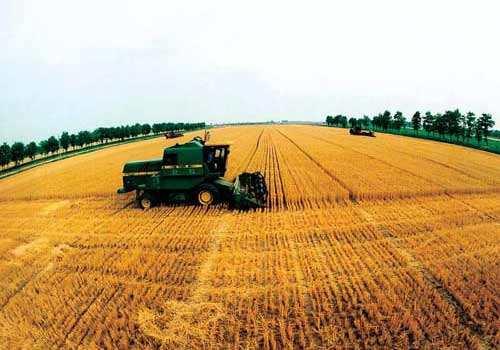 """种粮增收从""""靠产量""""转向""""靠质量"""""""