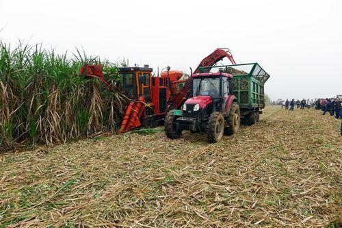 刘宪:我们这样看待推进甘蔗生产机械化问题