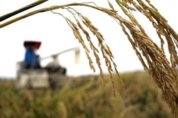 农业绿色发展之路更清晰