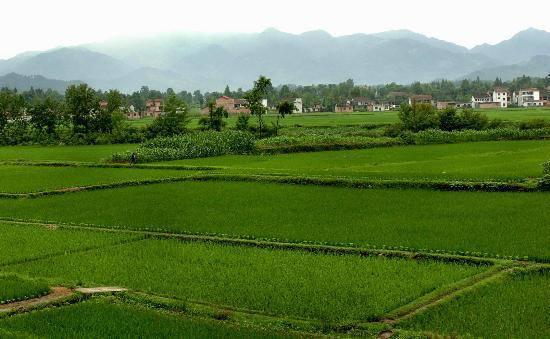 稳定土地承包关系 保障农民财产权益