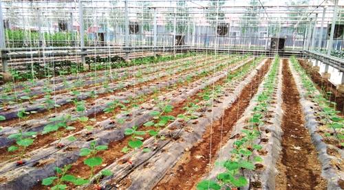 《四川省农业机械推广鉴定大纲》(第二批)的公告