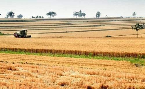 多地水稻启动托市收购 优质稻米倍受青睐