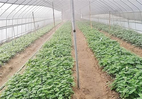 福建省关于公布农机质量投诉监督机构相关信息的通告