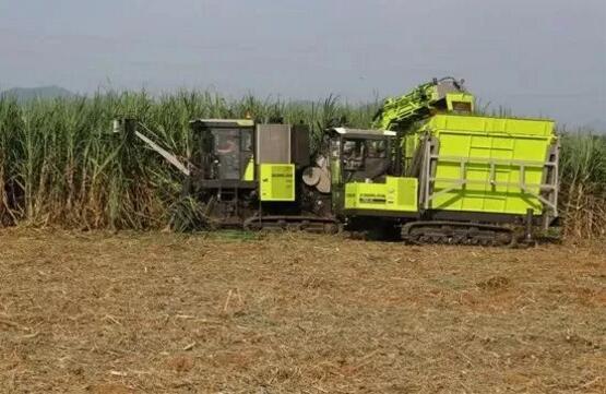 努力同心 我国甘蔗机械化有望加快