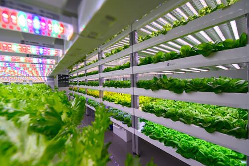 光生物技术开启未来农业大门