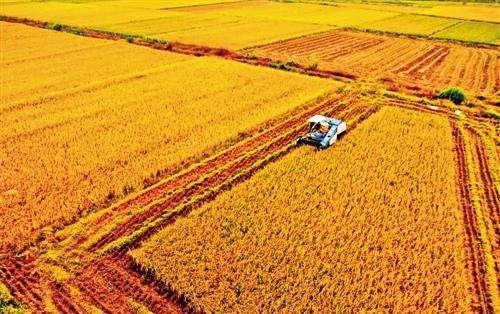 12月份小麦价格将稳定在高位 稻谷或许止涨企稳