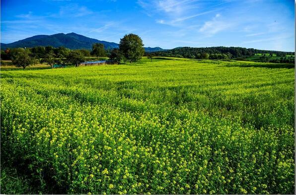 农业部推动创建农村一二三产业融合发展先导区