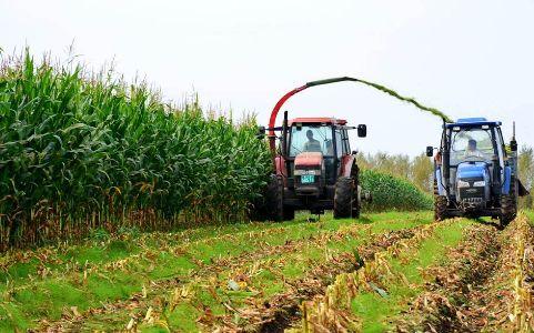 2017年全国粮食在种植结构调整优化基础上再获丰收