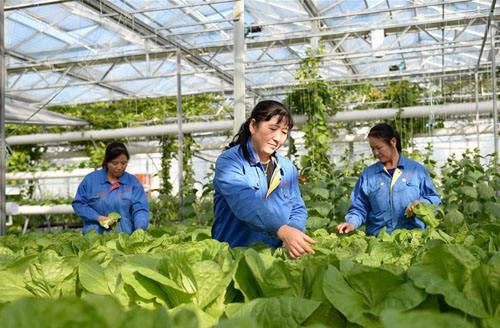 国务院召开常务会议 新型农业经营主体的措施确定进一步扶持和培育
