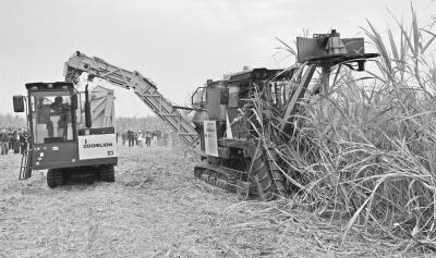 """甘蔗机械化博览会助力糖业""""二次创业"""""""